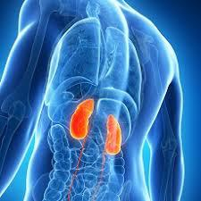 All about Chronic Kidney Disease